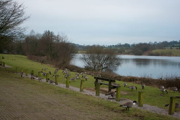 tittesworth water