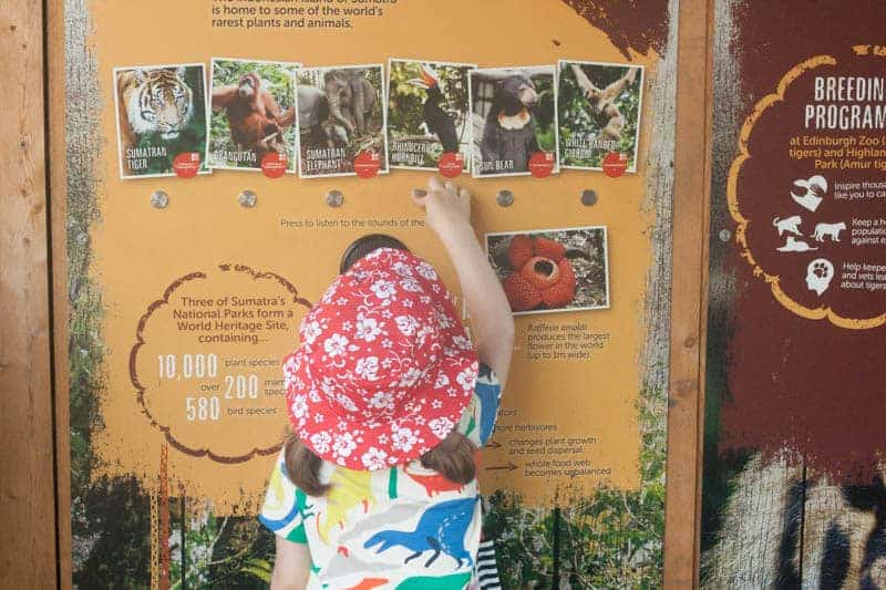 Edinburgh zoo with children review