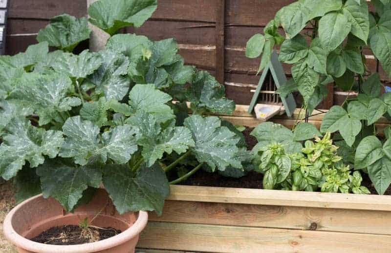 raised bed gardening with kids