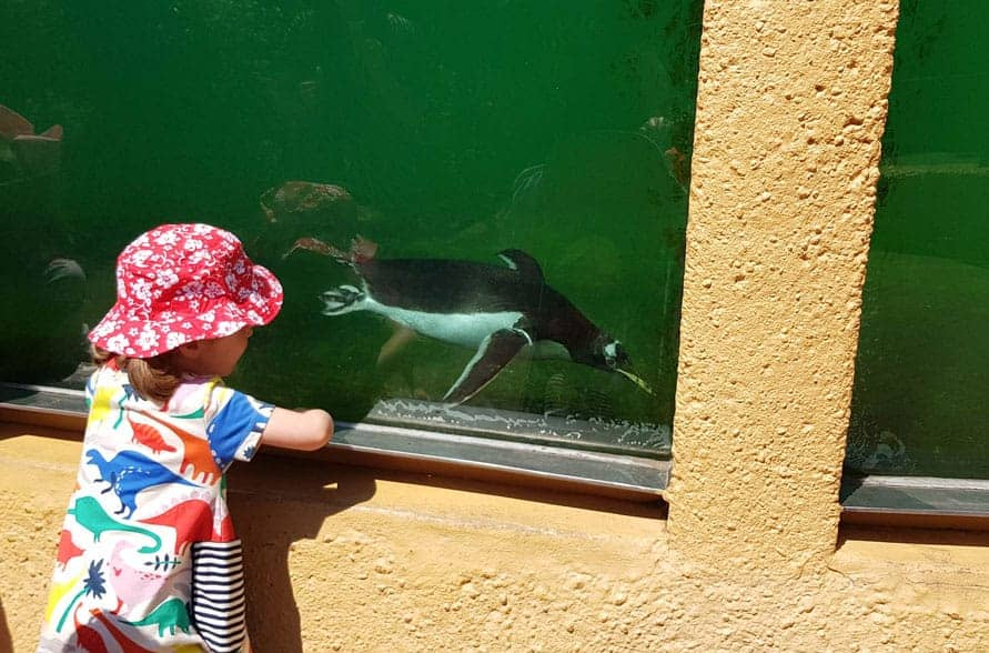 child looking through glass at a penguin